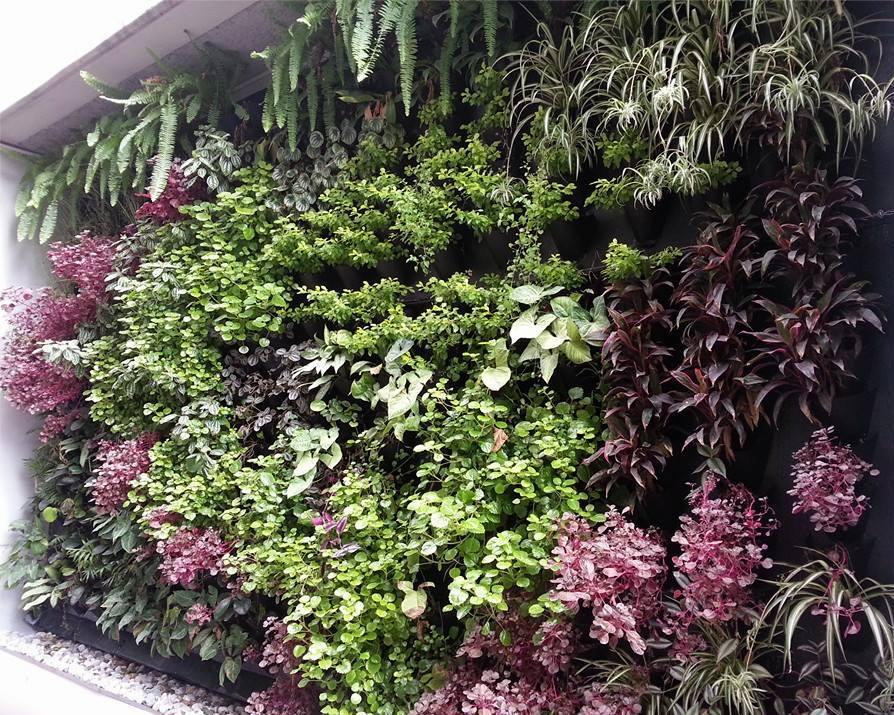 Taller de jardines verticales for Elaboracion de jardines verticales