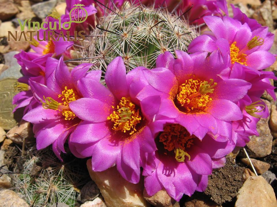 Curso intensivo propagaci n de cact ceas y otras plantas for Cactaceas y suculentas