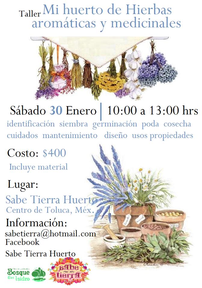 Taller mi huerto de hierbas arom ticas y medicina - Huerto de plantas aromaticas ...