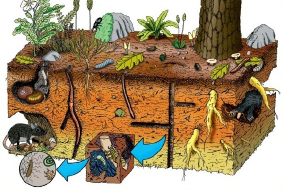 Micro macro organismos en el suelo for Que elementos conforman el suelo