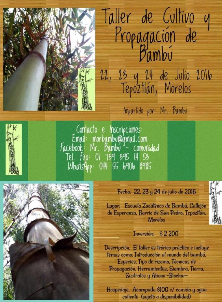 Taller de cultivo y propagaci n del bamb - Cultivo del bambu ...